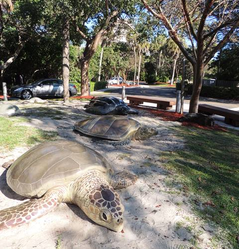 Gumbo Limbo Nature Center North Ocean Boulevard Boca Raton Fl