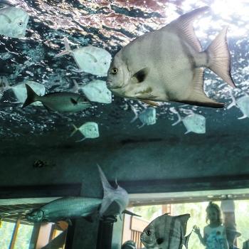 fish swimming in large aquarium